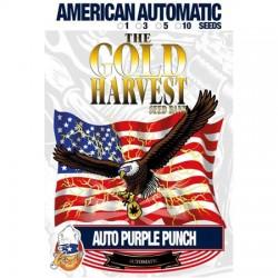 auto Purple Punch semillas marihuana