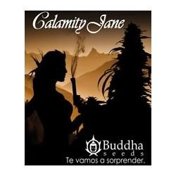 semillas marihuana Calamity Jane de Buddha Seeds