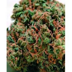semillas marihuana Sour Diesel de BlimBurn