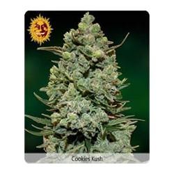 Cookies Kush de Barney´s Farm semillas marihuana
