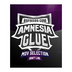 Amnesia Glue de BSF semillas marihuana