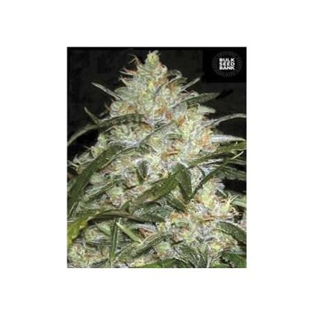 Grapefruit de Bulk Seeds semillas marihuana