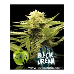 Black Dream de Eva Seeds semillas marihuana