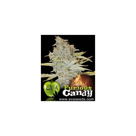 Furious Candy de Eva Seeds semillas cannabis
