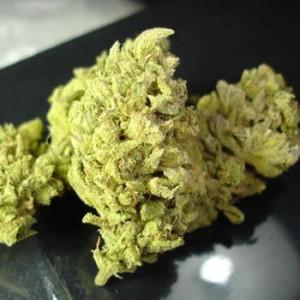 Semillas marihuana No Name de Medical Seeds