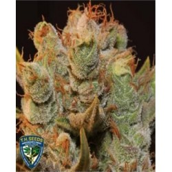 MK Ultrabubble de TH Seeds semillas marihuana