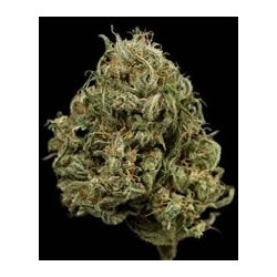 semillas marihuana Cheese XXL auto de Dinafem