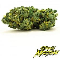 auto Gren Finger Strain Machine semillas marihuana