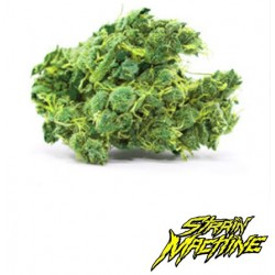 auto Tropicanna Lemon Strain Machine semillas marihuana