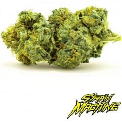 Tangie XL auto Strain Machine semillas marihuana