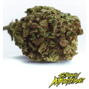 auto Girl Scout Cookies auto Strain Machine semillas marihuana