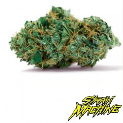 Gelato Glue Strain Machine semillas marihuana