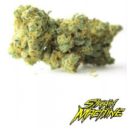 Monster Yeti Strain Machine semillas marihuana