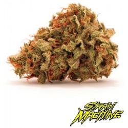 semillas marihuana Tropicanna Lemon Strain Machine