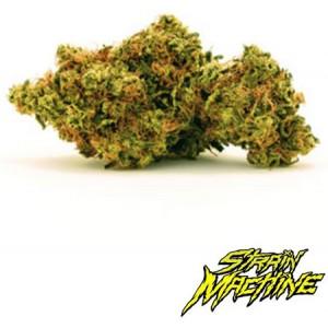 Zkittlez de Strain Machine semillas marihuana