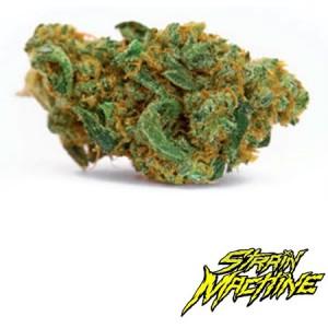 Original Gangster Strain Machine semillas marihuana