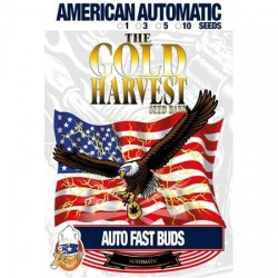 semillas marihuana auto Fast Buds de Gold Harvest