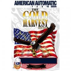 Auto Gelato de Gold Harvest semillas cannabis