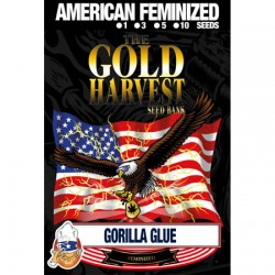 Gorilla Glue de Gold Harvest semillas marihuana