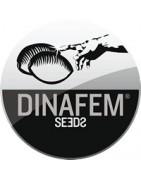 Dinafem seeds banco español de semillas de marihuana